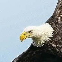 Oversharpened eagle