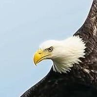 Properly sharpened eagle