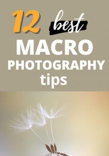 Macro Photography 1-1