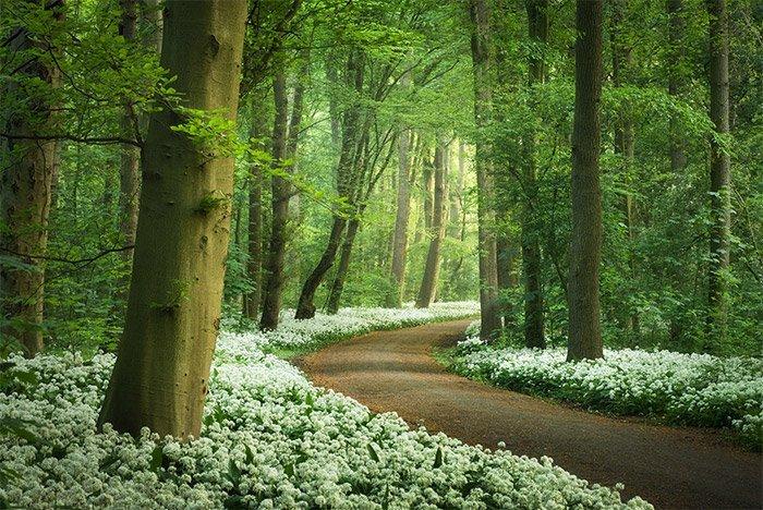 Albert Dros - The Garlic forest
