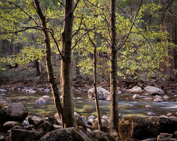 Charles Cramer - Trees and Rocks