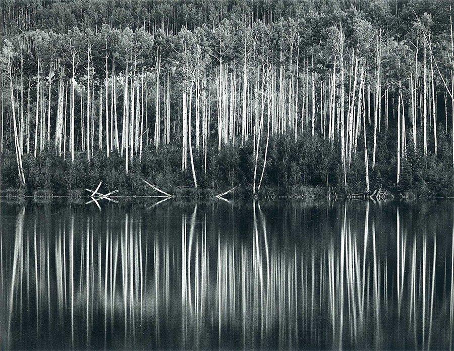 John Sexton - Trees