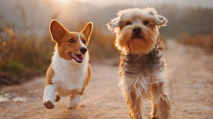 Photoshoot Ideas - Pet photography