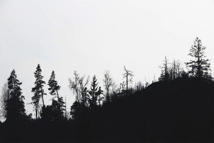 Silhouette photography - treeline