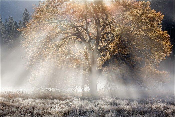 Landscape Photographers 3