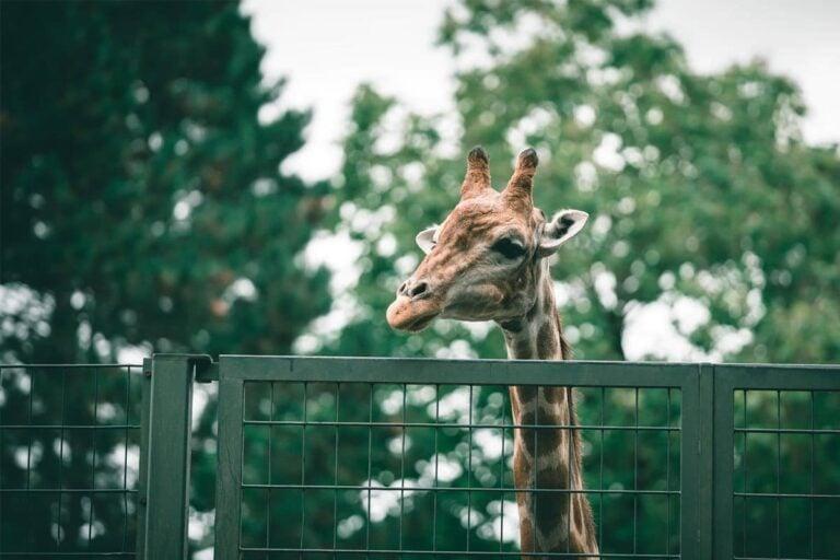 Zoo photography tips - thumbnail
