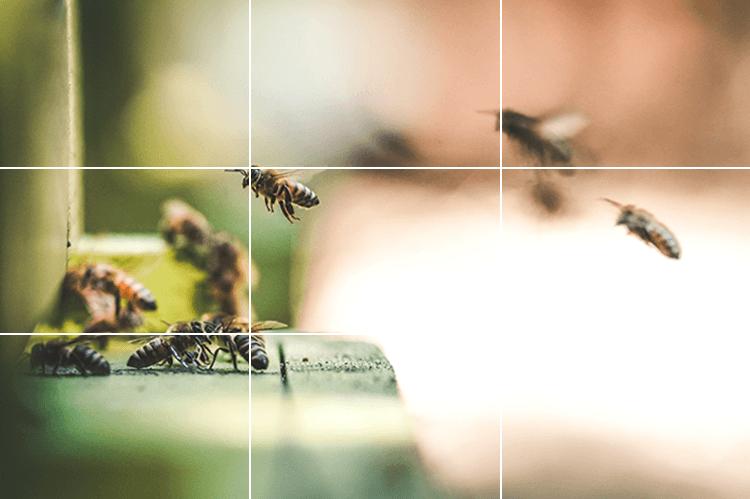 Rule of Thirds bees.jpg