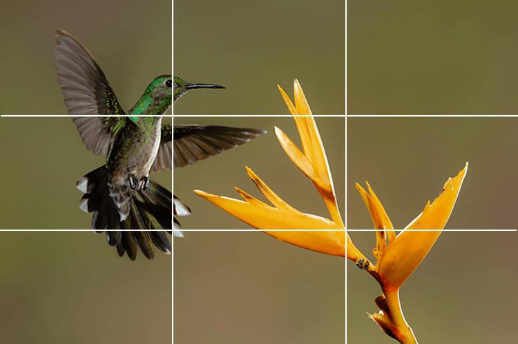 Rule of Thirds hummingbird on intersection.jpg