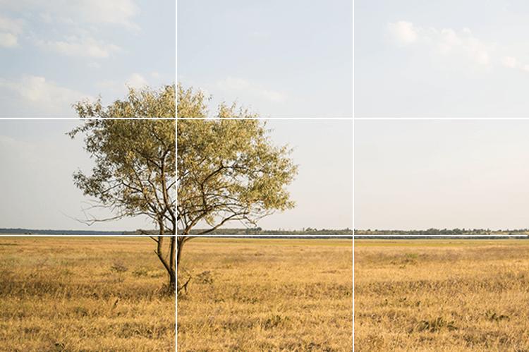 Rule of Thirds tree 1.jpg