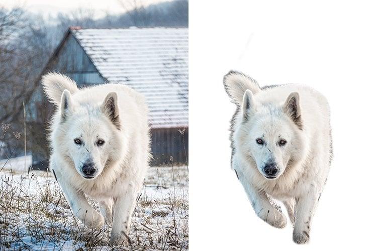 Background remover comparison - dog