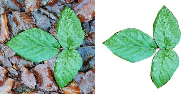 Background remover comparison - leaf