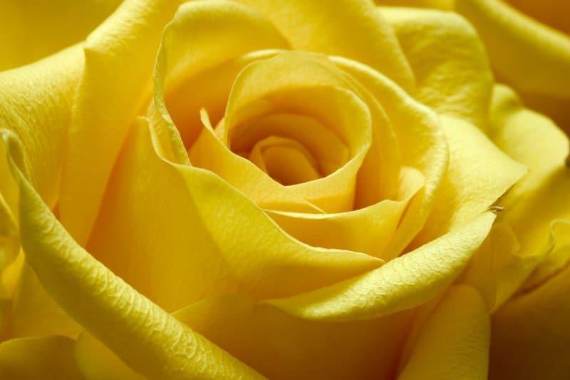 Everything yellow - Shutterstock idea