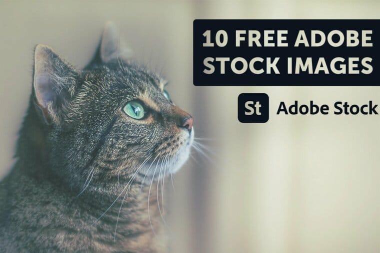Adobe Stock free trial Thumbnail