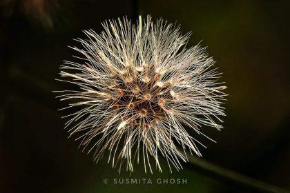 Susmita Ghosh thumbnail