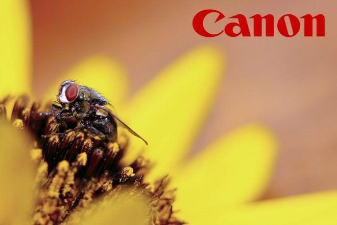 Best budget macro lens for Canon thumbnail